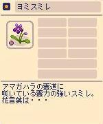 ヨミスミレ.jpg